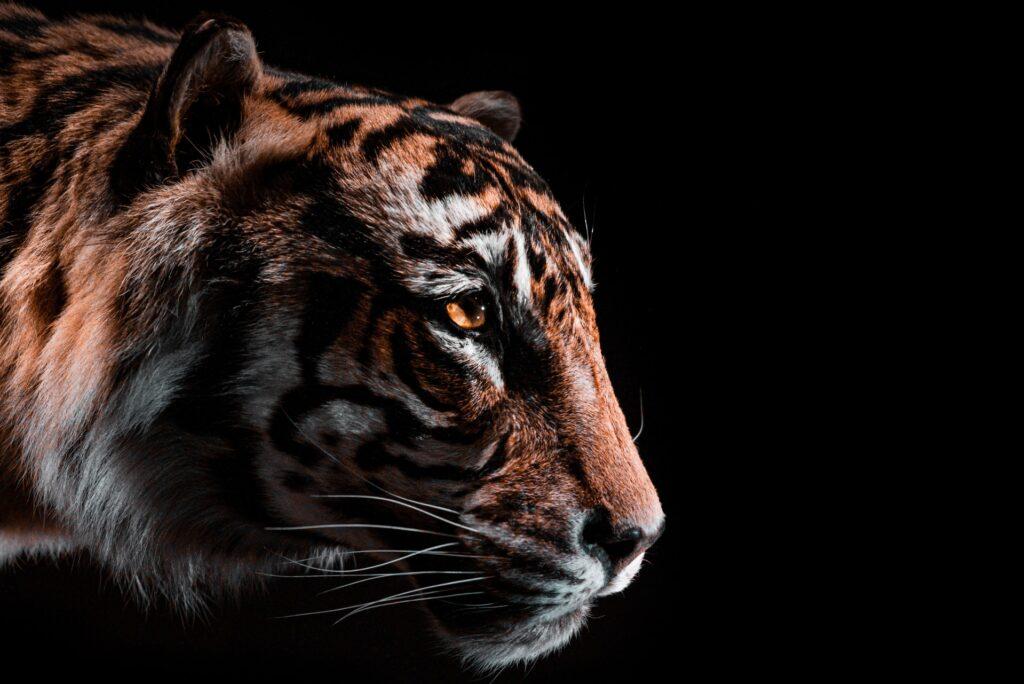 tiger king cast